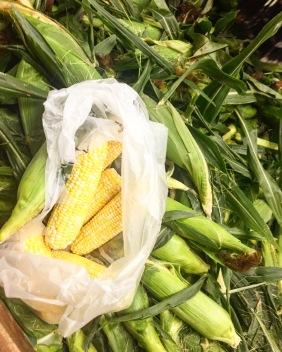 Herles Corn.jpg